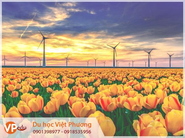 Tư vấn du học Hà Lan tại Lâm Đồng